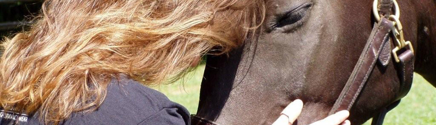 Touch, Heal, Equine Thearpy