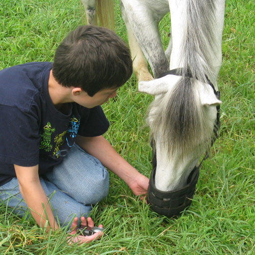 EAL – Equine Assisted Learning