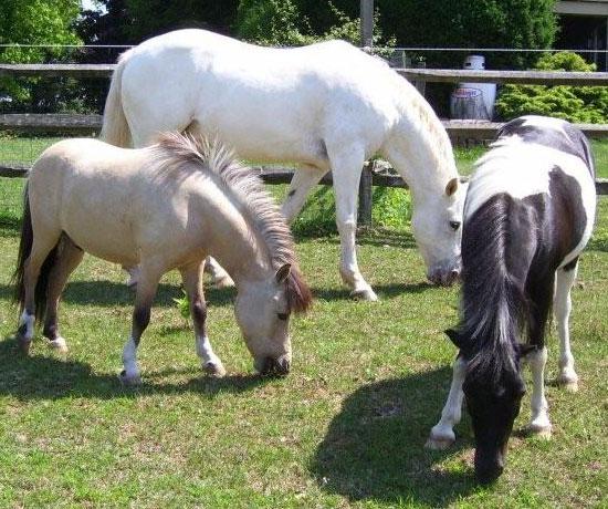 EquiTeam Equine Staff