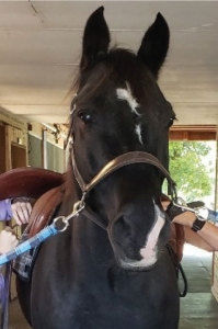Bulletproof 2019 Therapy Horse of The Year